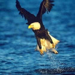 Birding at our Waterfront Cottages in Sequim