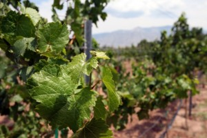 New Mexico Wine Trail