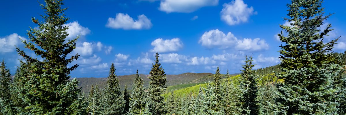 Stunning springmountain vista featuring vivid green pine trees and a lovely blue sky with clouds