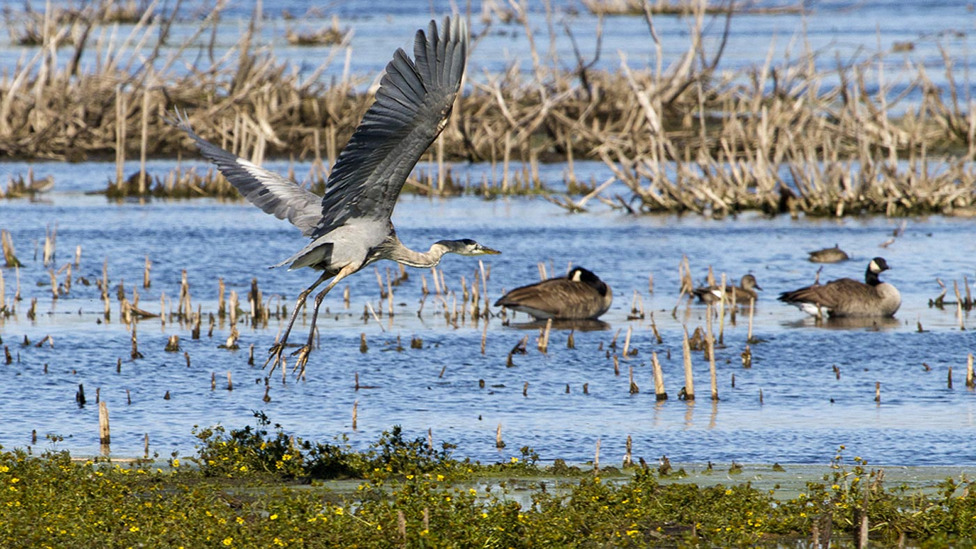 You Have to See the Fall Bird Migration at Horicon Marsh!