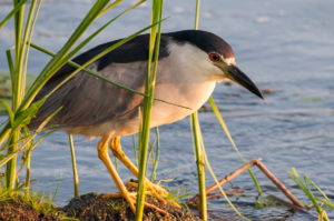 Go Birding with the Horicon Marsh Boat Tours Before the Season is Over