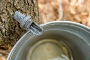Maple Syrup Production in New Hampshire