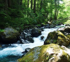 Sequim Hikes take you to the Dungeness River