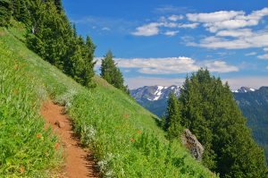 Enjoy the best Hikes in the Olympic Mountains,