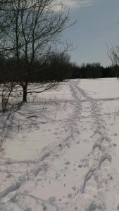 Snowshoeing at The Speckled Hen Inn