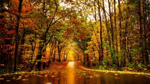 Fall Foliage Getaway During Minnesota Autumn