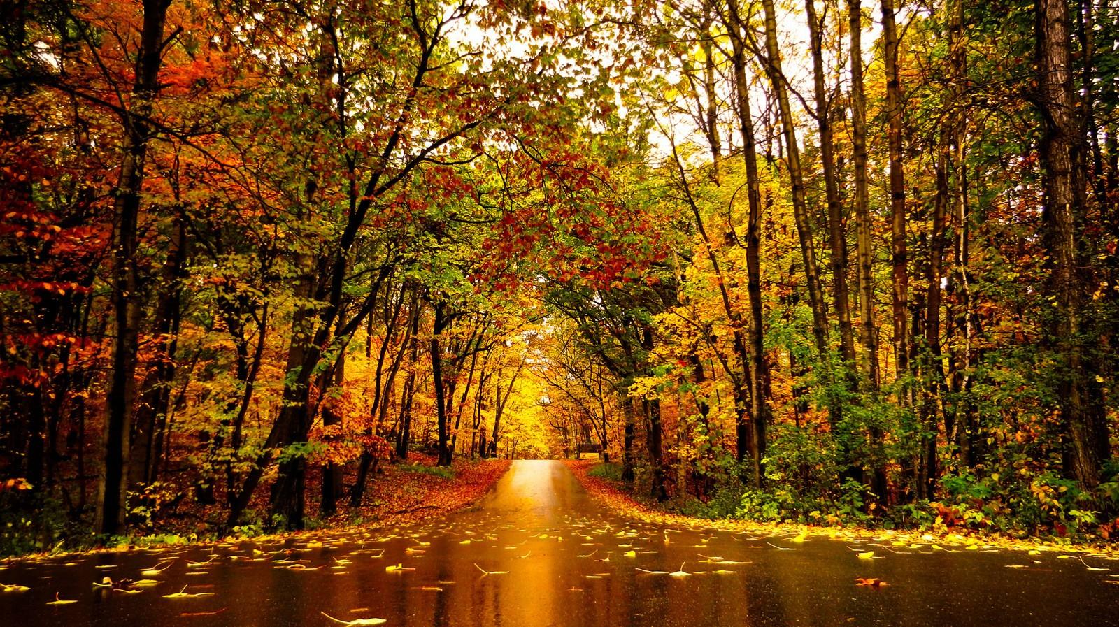 Fall Leaves During Minnesota Autumn