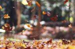 Fall Foliage Getaway in Spicer Minnesota