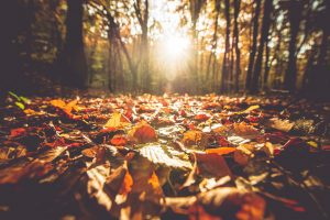 Fall Hiking and Events in Portland, Oregon