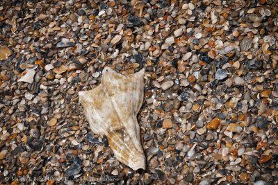 sea-shells-01
