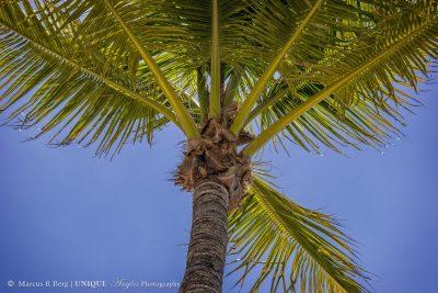 palm-treelogo