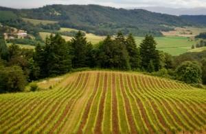 Oregon Wine Country wedding