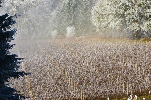Oregon Wine Country in Winter