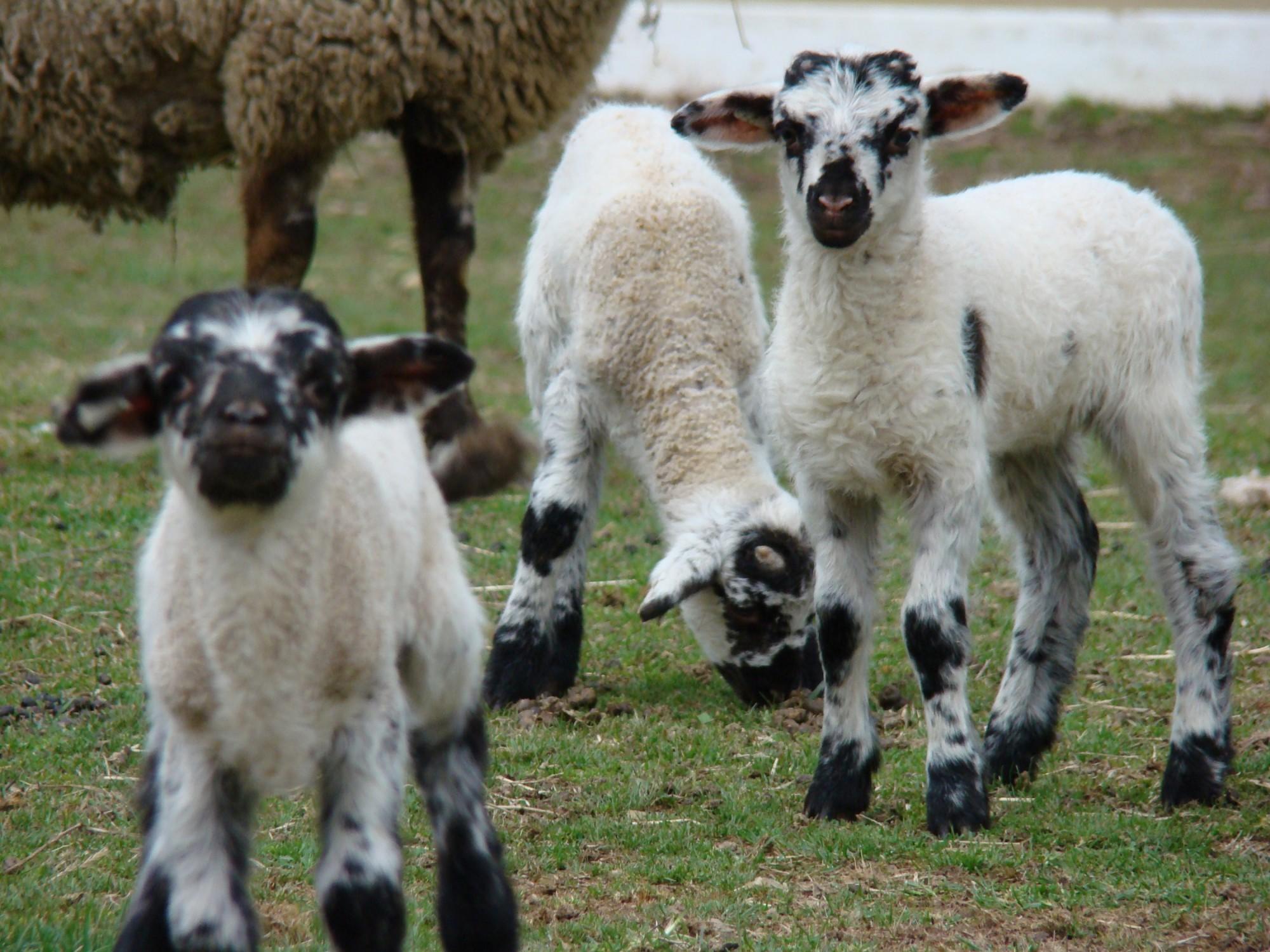 the animals on washington s farm george washington s mount vernon