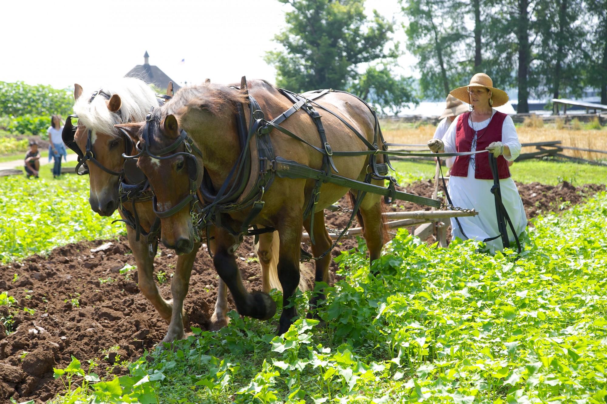The Animals On Washingtons Farm George Mount Vernon