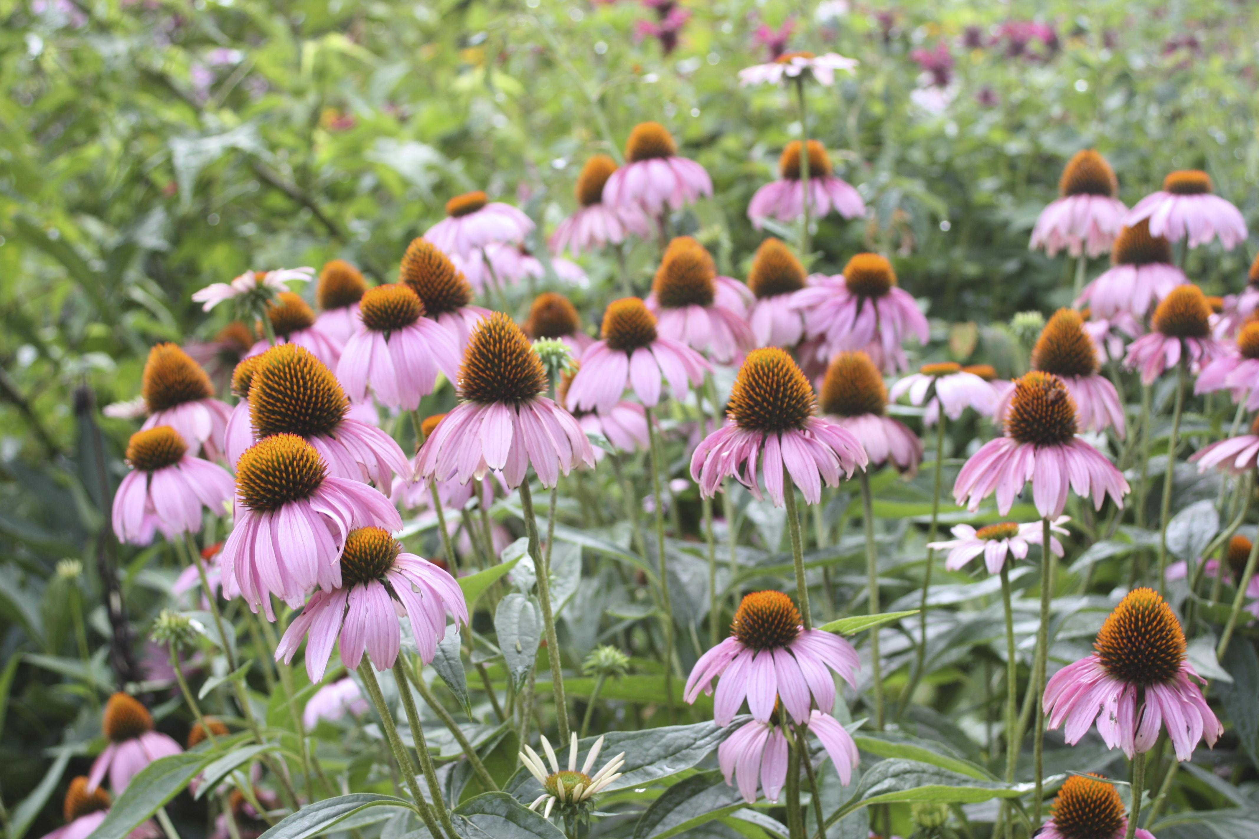 Plant Finder George Washingtons Mount Vernon