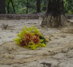 A bouquet of flowers marks an individual burial uncovered during the Slave Cemetery Survey.