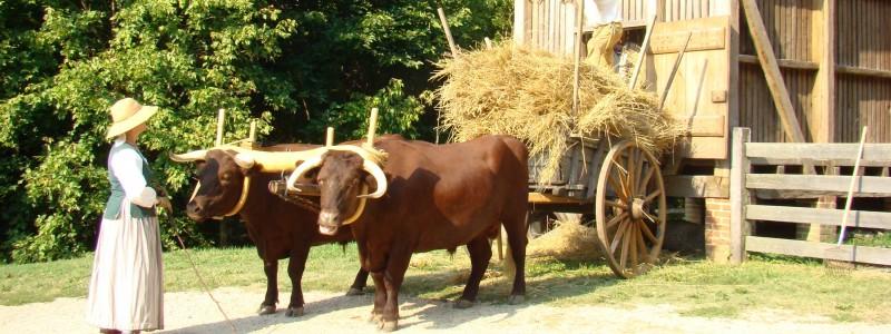 The Animals On Washingtons Farm