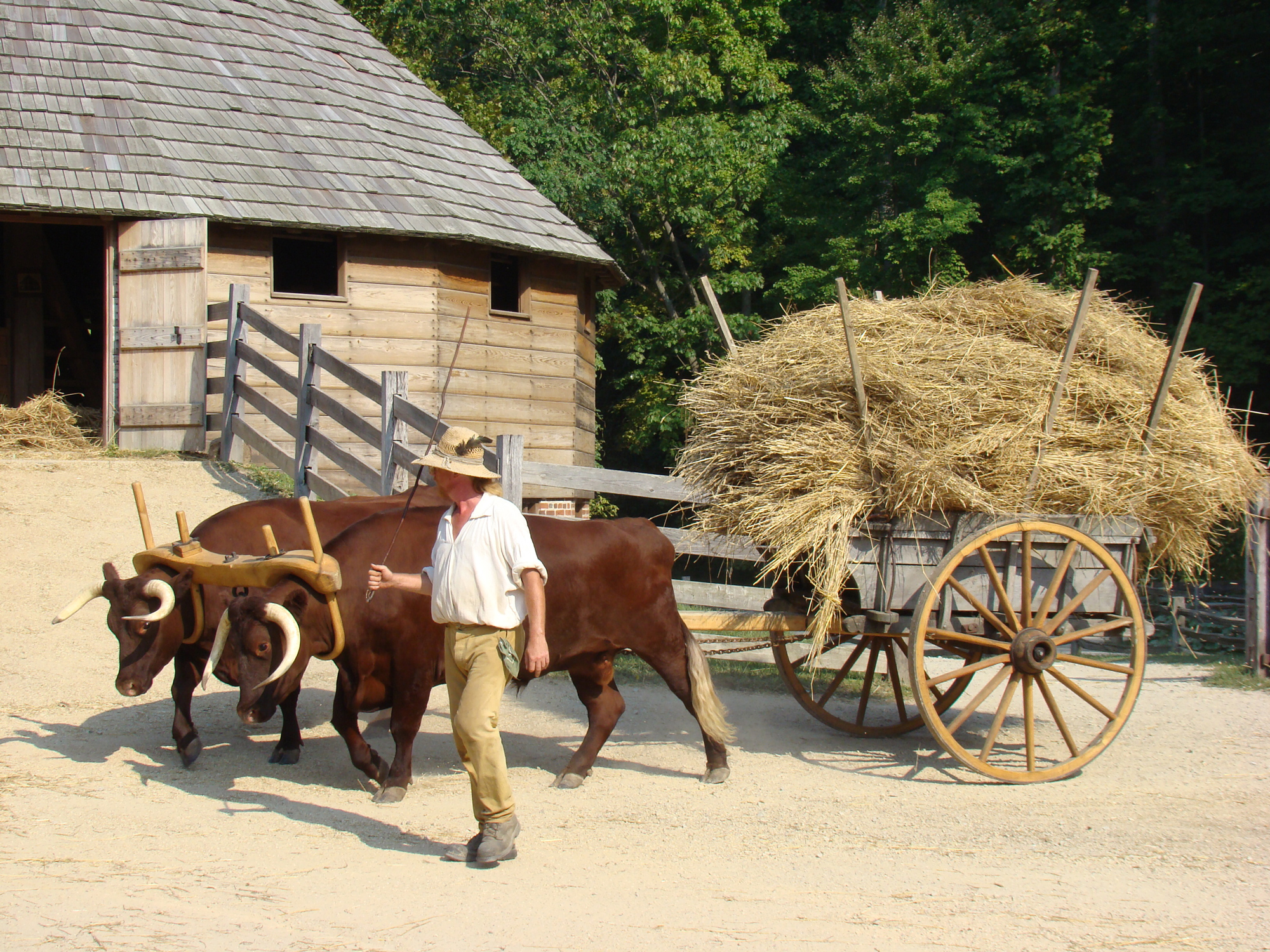 Heritage breed animals can be found working seasonally on the Pioneer Farm
