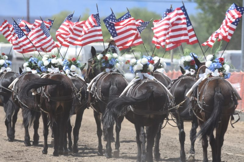 Mule Days Pageant with American Flags