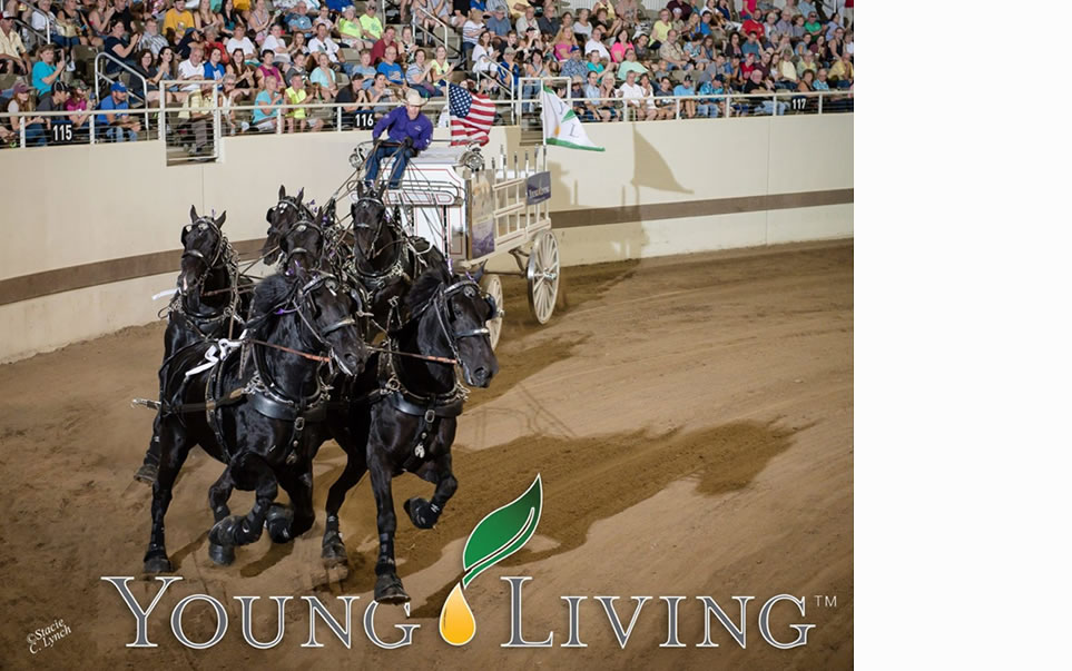 Percherons Rumbling into Bishop this Memorial Day Weekend
