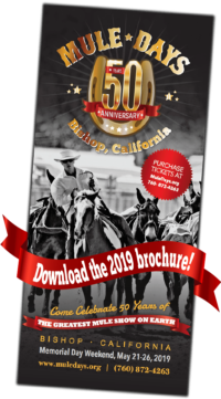 mule days PDF brochure link