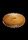 Fruteira Centopeia por Gustavo Engelhardt