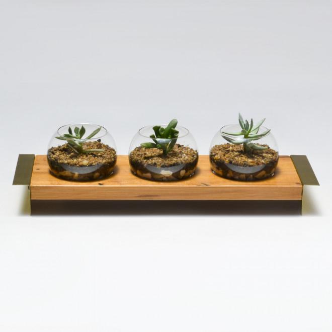 terrario de plantas madeira e aluminio