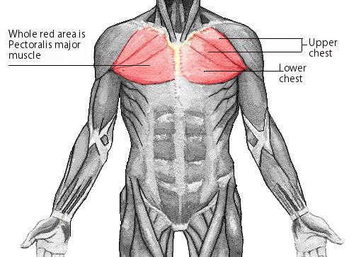 The Only 3 Chest Exercises You Need For Massive Pecs
