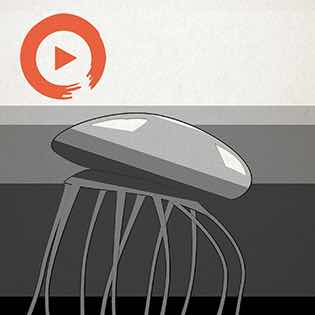 Music to Satisfy Your Inner Jellyfish Playlist Home Page