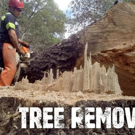 Tree removal melbourne1