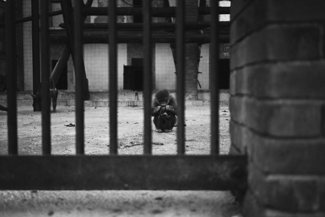 caged01