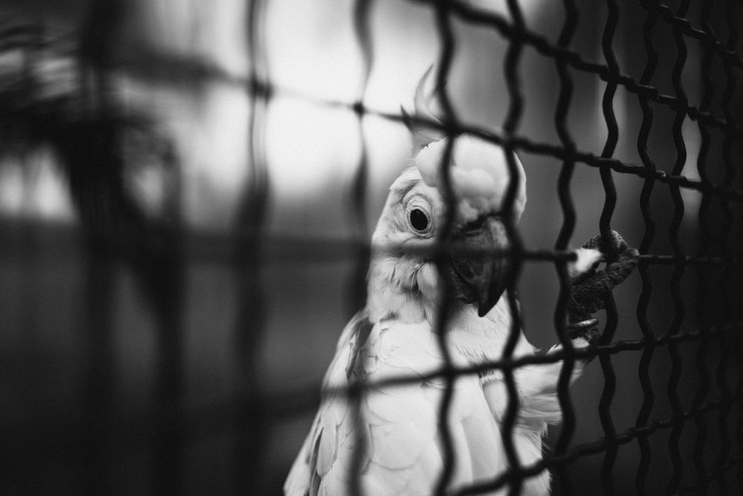caged02