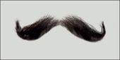 Atelier Bassi Moustache-M7