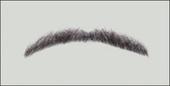 Atelier Bassi Moustache-M2