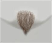 Atelier Bassi Chin Beard-C0