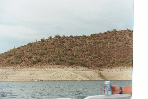 Mountains of hundreds of cactus surround Lake Pleasant.