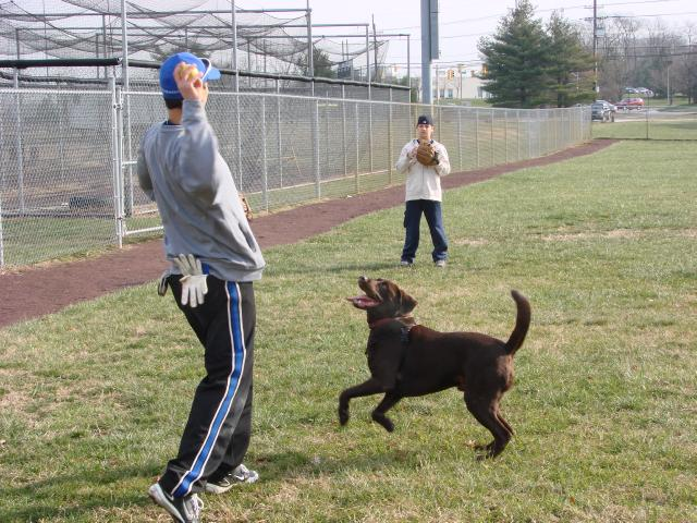 Frank Gambino's Chocolate Lab wants to play some catch with the guys as they get ready for Winterball 2010