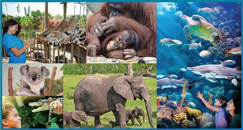 Discount Combo Tickets Now on Sale! Tampa's Lowry Park Zoo & The Florida Aquarium