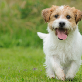 7 Guidelines That Will Make the Dog Park Fun