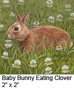 Baby Bunny Eating Clover c