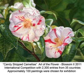 Candy Stripped Camellias titled
