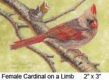 Female Cardinal on Limb c