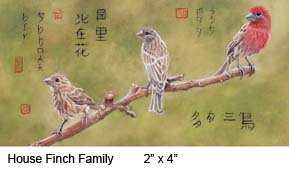 House Finch Family c