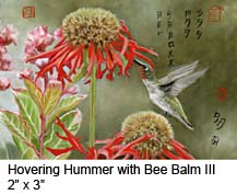 Hovering Hummer with Bee Balm III c