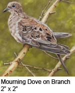 Mourning Dove on Branch c