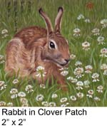 Rabbit in Clover Patch c