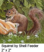 Squirrel by Shell Feeder c