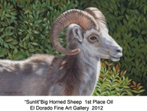Sunlit Big Horn Sheep titled