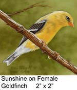 Sunshine on Female Goldfinch c